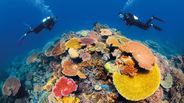 澳洲 大堡礁